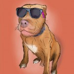 Digital painting of this cool pit bull wearing sunglasses